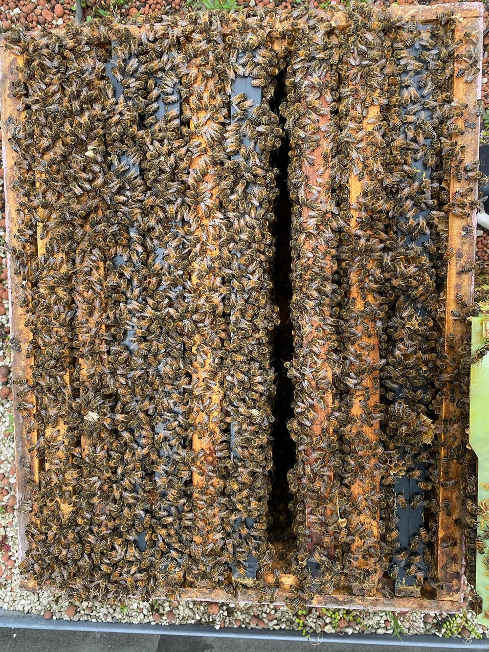 Bees in their hive at Kim Chan Events